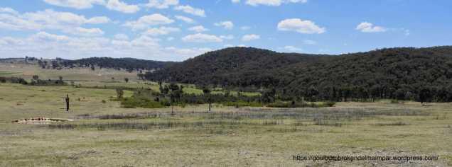 Native grassland habitat at Wooragee